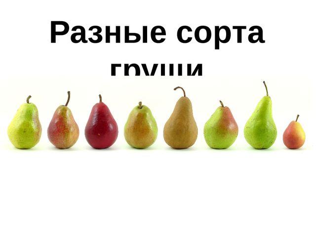 Разные сорта груши