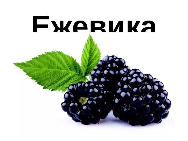 Ежевика