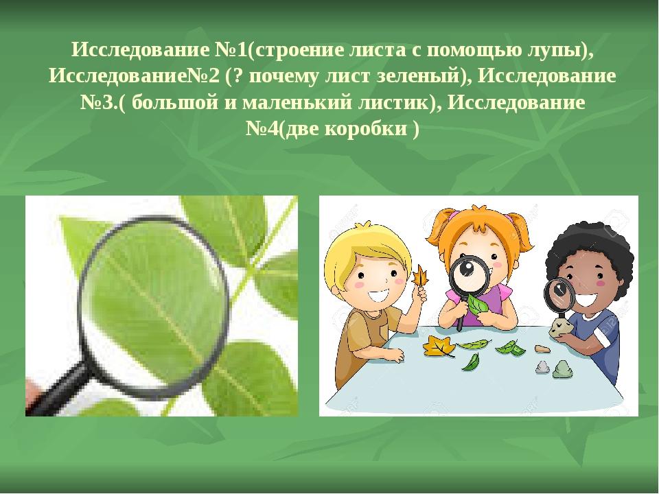 Исследование №1(строение листа с помощью лупы), Исследование№2 (? почему лист...