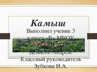 Камыш Выполнил ученик 3 класса «Б» МБОУ «РСОШ №4» Денисов Андрей. Классный ру