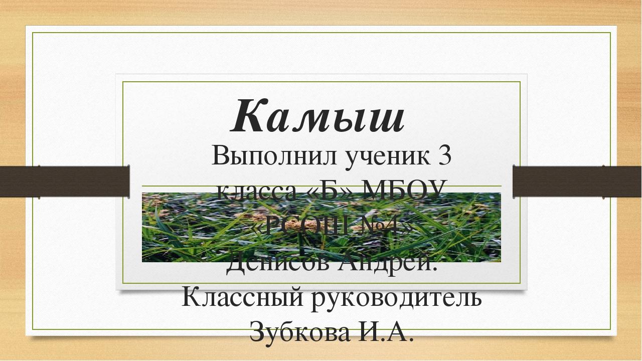 Камыш Выполнил ученик 3 класса «Б» МБОУ «РСОШ №4» Денисов Андрей. Классный ру...