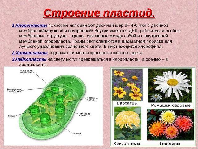 Строение пластид. 1.Хлоропласты по форме напоминают диск или шар d= 4-6 мкм с...