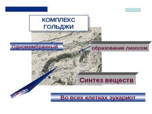 КОМПЛЕКС ГОЛЬДЖИ Одномембранный Во всех клетках эукариот Связь с ЭПС Синтез в