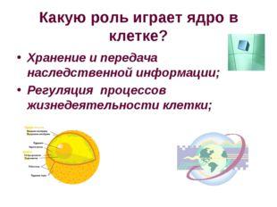 Какую роль играет ядро в клетке? Хранение и передача наследственной информаци
