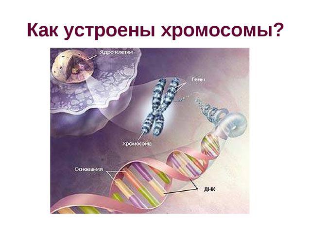 Как устроены хромосомы?