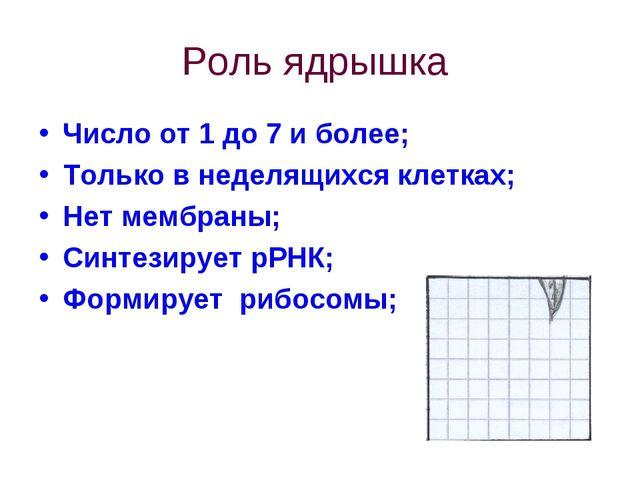 Роль ядрышка Число от 1 до 7 и более; Только в неделящихся клетках; Нет мембр...