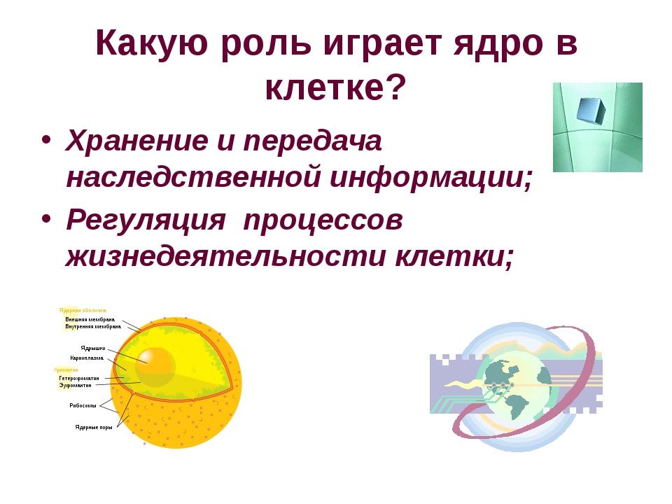 Какую роль играет ядро в клетке? Хранение и передача наследственной информаци...