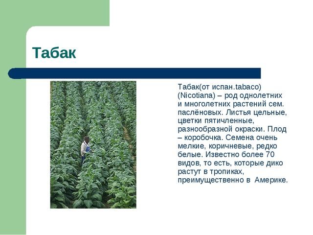 Табак Табак(от испан.tabaco) (Nicotiana) – род однолетних и многолетних раст...