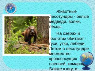 Животные лесотундры - белые медведи, волки, песцы. На озерах и болотах обит