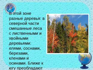 В этой зоне разные деревья: в северной части смешанные леса с лиственными и