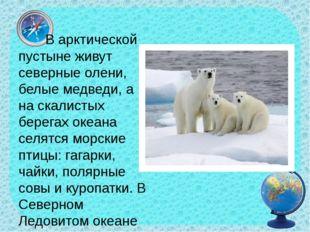 В арктической пустыне живут северные олени, белые медведи, а на скалистых бе