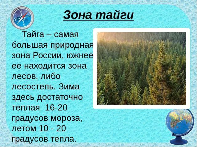 Зона тайги Тайга – самая большая природная зона России, южнее ее находится зо...