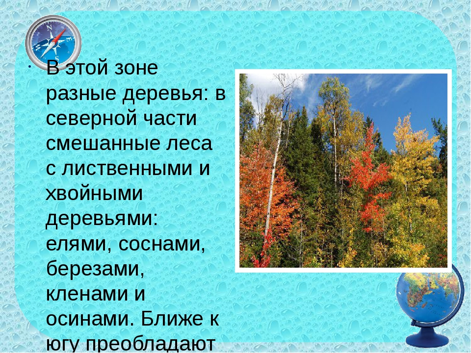 В этой зоне разные деревья: в северной части смешанные леса с лиственными и...