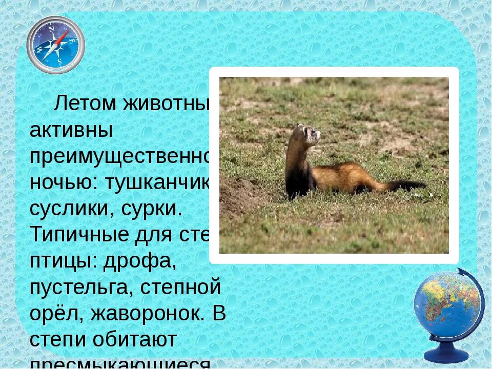 Летом животные активны преимущественно ночью: тушканчики, суслики, сурки. Ти...