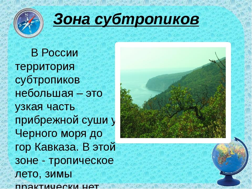 Зона субтропиков В России территория субтропиков небольшая – это узкая часть...