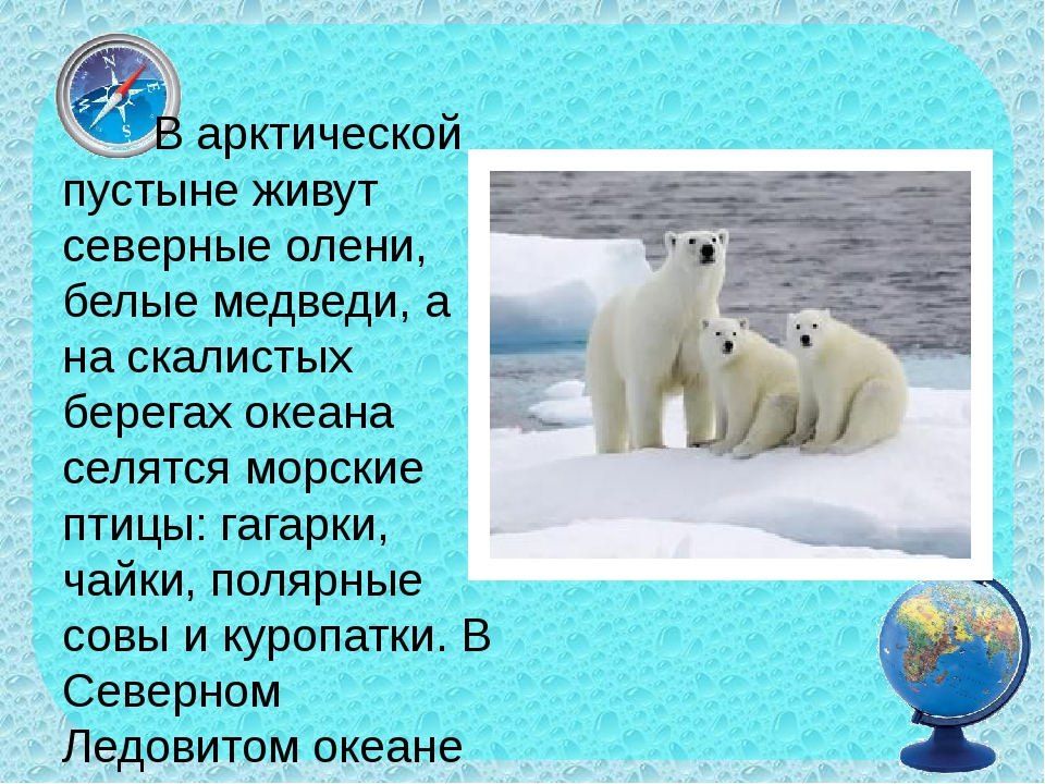 В арктической пустыне живут северные олени, белые медведи, а на скалистых бе...