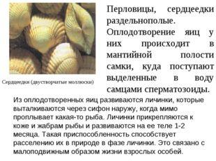 Перловицы, сердцеедки раздельнополые. Оплодотворение яиц у них происходит в м