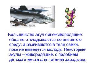 Большинство акул яйцеживородящие: яйца не откладываются во внешнюю среду, а