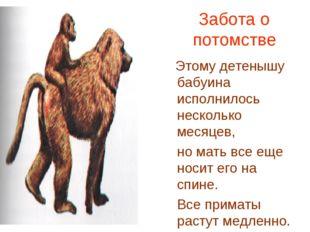 Забота о потомстве Этому детенышу бабуина исполнилось несколько месяцев, но м