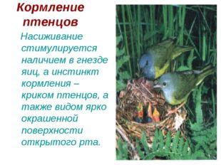 Кормление птенцов Насиживание стимулируется наличием в гнезде яиц, а инстинкт