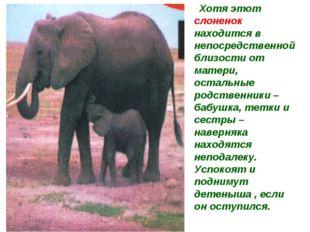 Хотя этот слоненок находится в непосредственной близости от матери, остальны