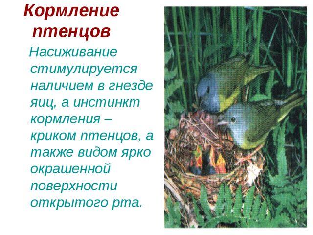 Кормление птенцов Насиживание стимулируется наличием в гнезде яиц, а инстинкт...
