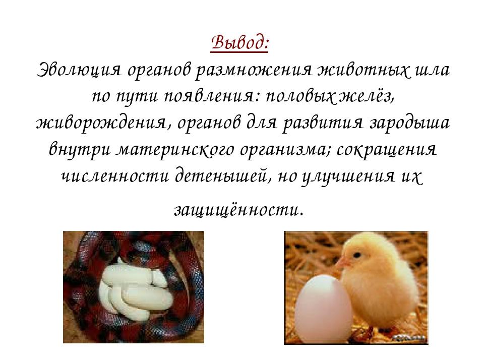Вывод: Эволюция органов размножения животных шла по пути появления: половых ж...
