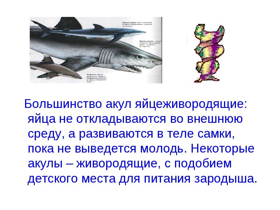 Большинство акул яйцеживородящие: яйца не откладываются во внешнюю среду, а...