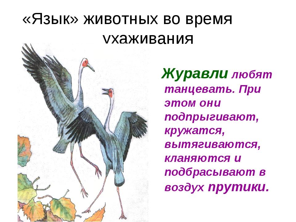 «Язык» животных во время ухаживания Журавли любят танцевать. При этом они под...