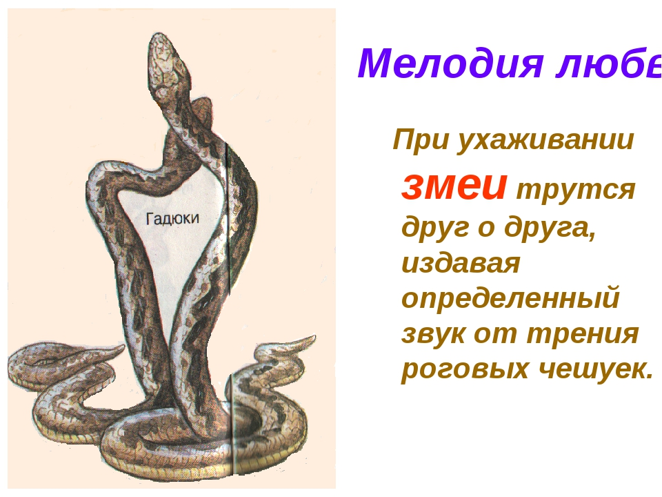 Мелодия любви При ухаживании змеи трутся друг о друга, издавая определенный з...