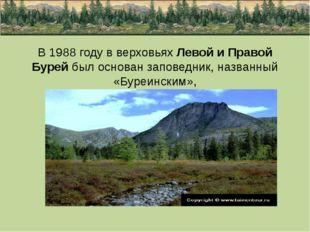 В 1988 году в верховьях Левой и Правой Бурей был основан заповедник, названны