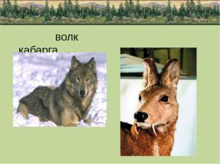 волк кабарга