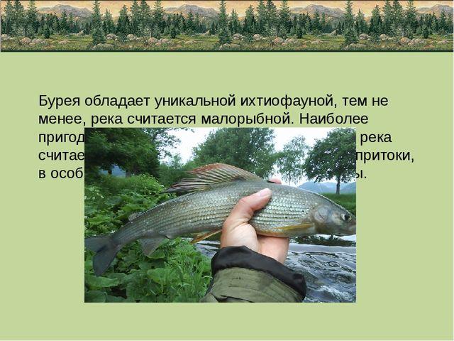 Бурея обладает уникальной ихтиофауной, тем не менее, река считается малорыбно...