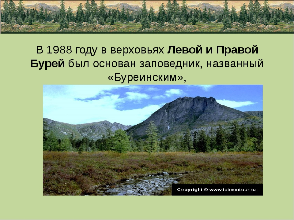 В 1988 году в верховьях Левой и Правой Бурей был основан заповедник, названны...