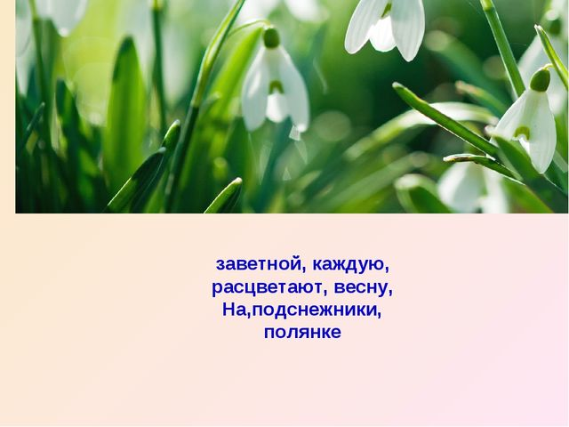 заветной, каждую, расцветают, весну, На,подснежники, полянке