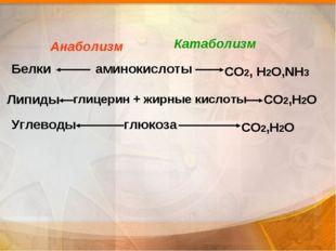 аминокислоты глицерин + жирные кислоты  глюкоза Белки Липиды Углеводы СО2, Н