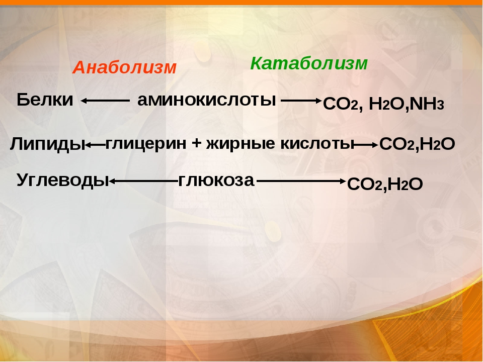 аминокислоты глицерин + жирные кислоты  глюкоза Белки Липиды Углеводы СО2, Н...