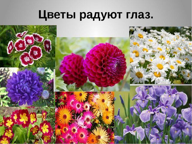 Цветы радуют глаз.