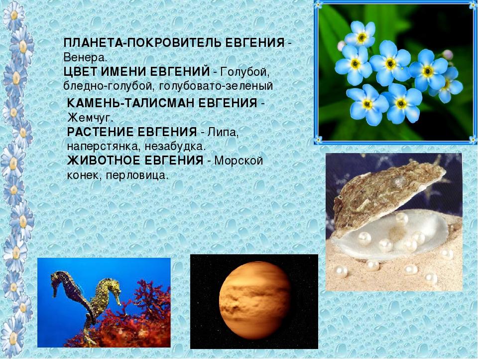 ПЛАНЕТА-ПОКРОВИТЕЛЬ ЕВГЕНИЯ - Венера. ЦВЕТ ИМЕНИ ЕВГЕНИЙ - Голубой, бледно-го...