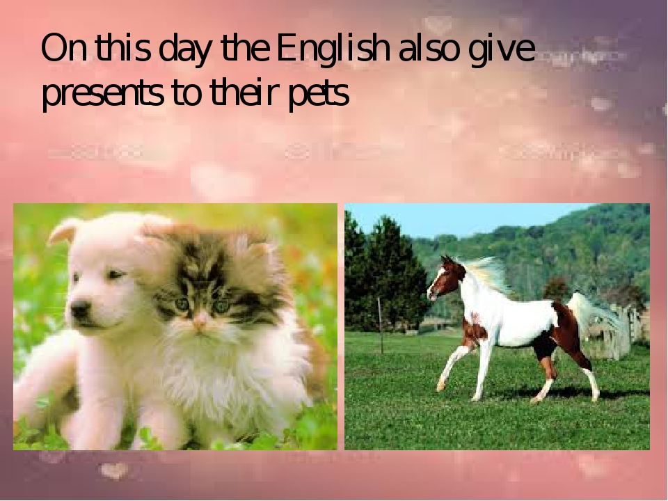 On this day the English also give presents to their pets