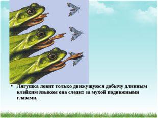 Лягушка ловит только движущуюся добычу длинным клейким языком она следит за м