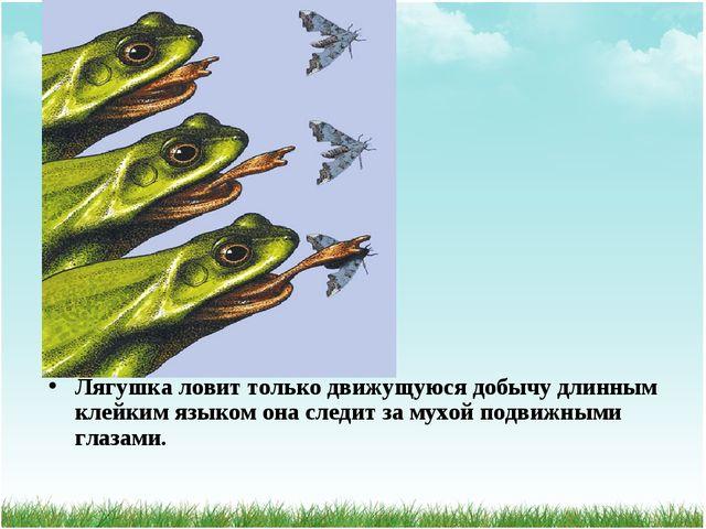 Лягушка ловит только движущуюся добычу длинным клейким языком она следит за м...