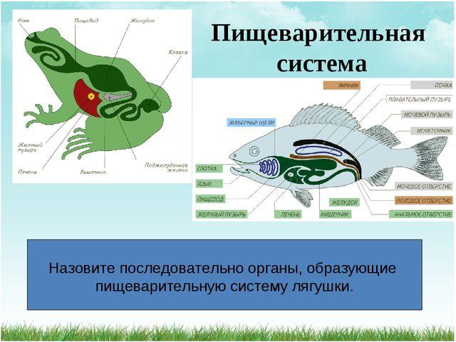 Пищеварительная система Назовите последовательно органы, образующие пищеварит...