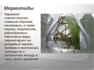 Мермитиды Заражают членистоногих, главным образом, насекомых, а также пауков,