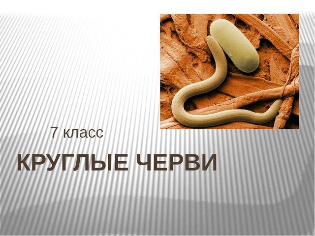 КРУГЛЫЕ ЧЕРВИ 7 класс