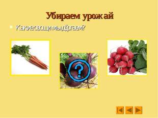Убираем урожай Какие овощи мы дёргаем?