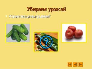 Убираем урожай Какие овощи мы срываем?