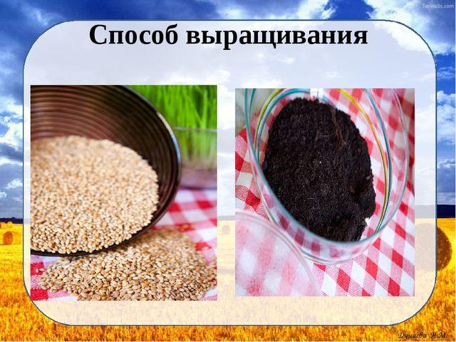 Способ выращивания Дунаева Н.М.