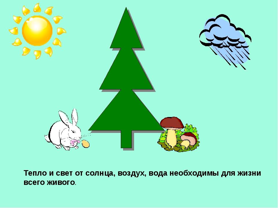 Тепло и свет от солнца, воздух, вода необходимы для жизни всего живого.