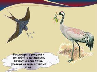 Рассмотрите рисунки и попробуйте догадаться, почему многие птицы улетают на з